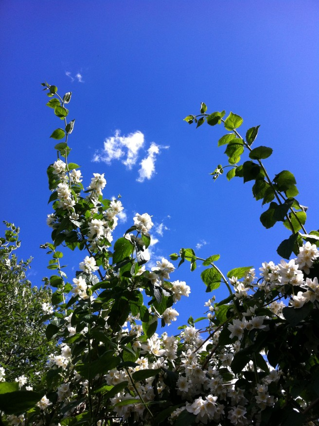 Girlcloud and flowers © Daphne C Alexopoulou